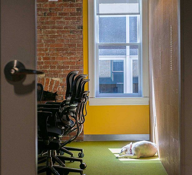 Luna the dog stealing an open meeting room to catch a nap in the sun.