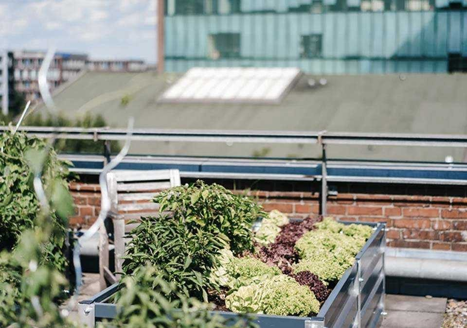 The Smiths Agency rooftop garden.